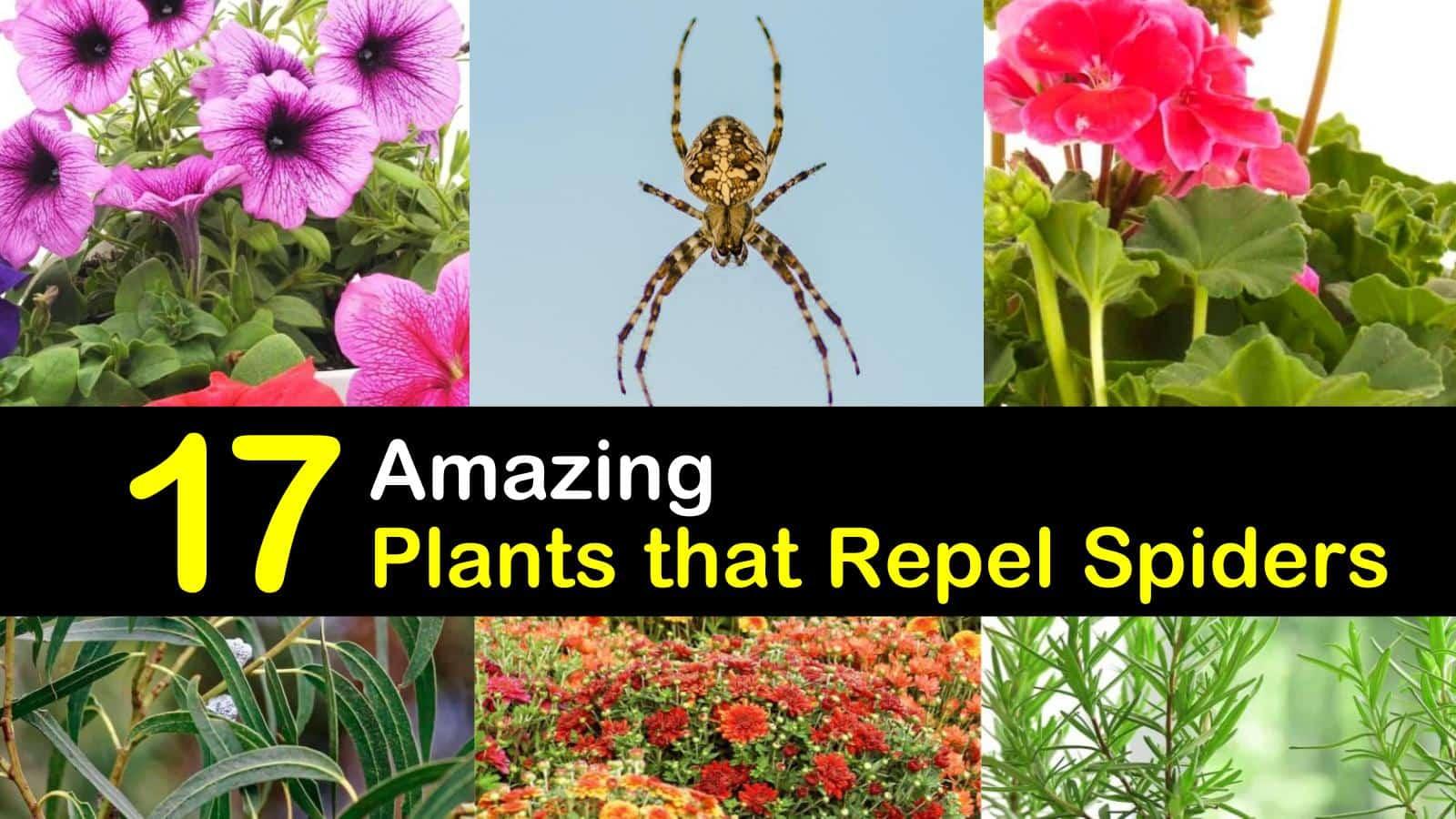 17 Amazing Plants that Repel Spiders