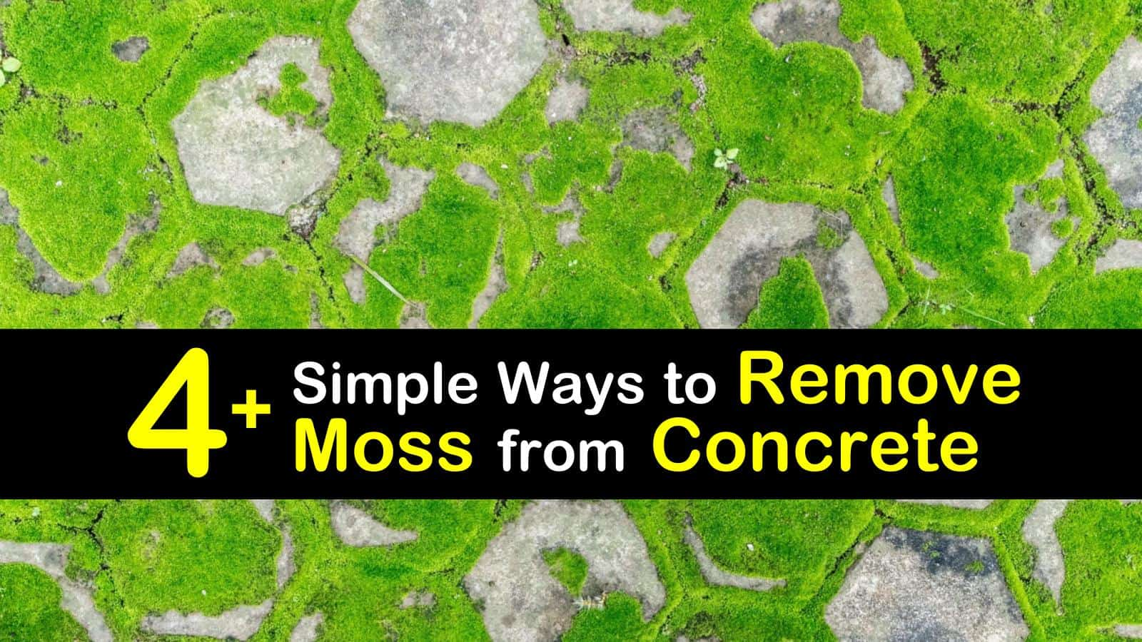 4 simple ways to remove moss from concrete
