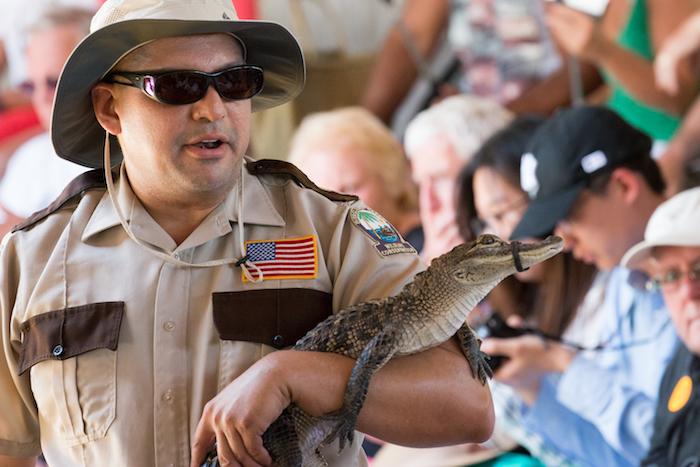 Baby Alligator at Everglades Safari Park Florida