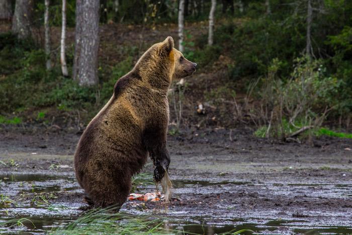 Ruka-Kuusamo Bears Finland