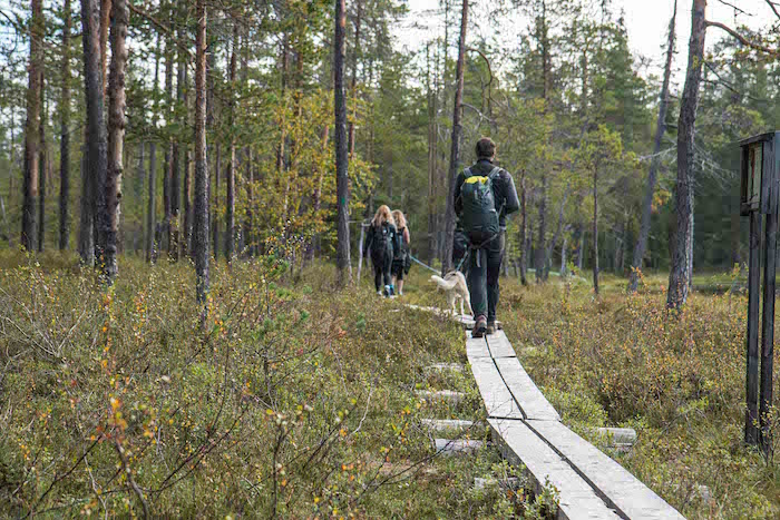 Guided husky hike in Oulanka National Park with Era-Susi Huskies