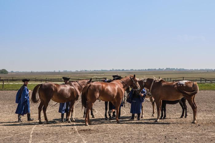 Horses Kalocsa Hungary