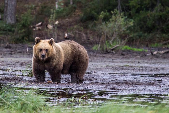 Ruka Kuusamo Bears Finland