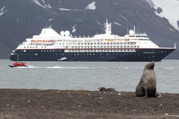 Whalers Bay Deception Island Antarctica Fur Seal and Silversea Silver Cloud