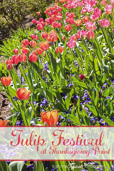Utah Family Activities Series- Tulip Festival at Thanksgiving Point + Giveaway