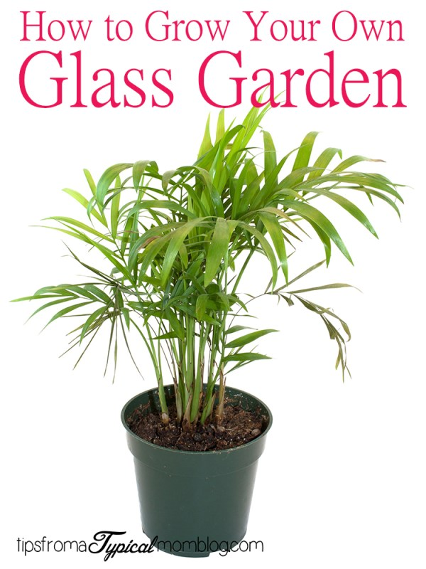 "How to Create a ""Glass Garden"" for Apartment Dwellers"