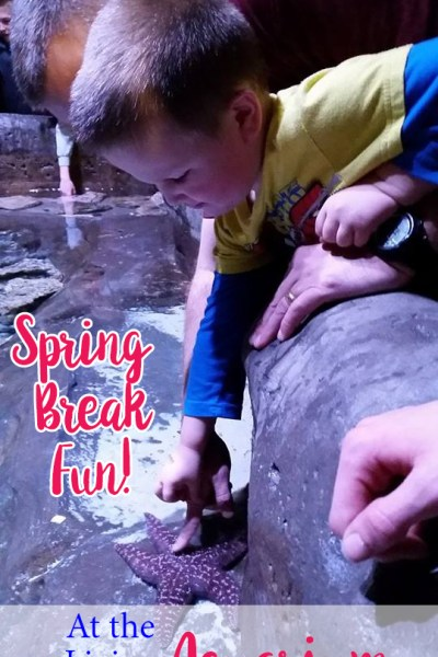 Loveland Living Planet Aquarium {Spring Break Utah Family Activity}