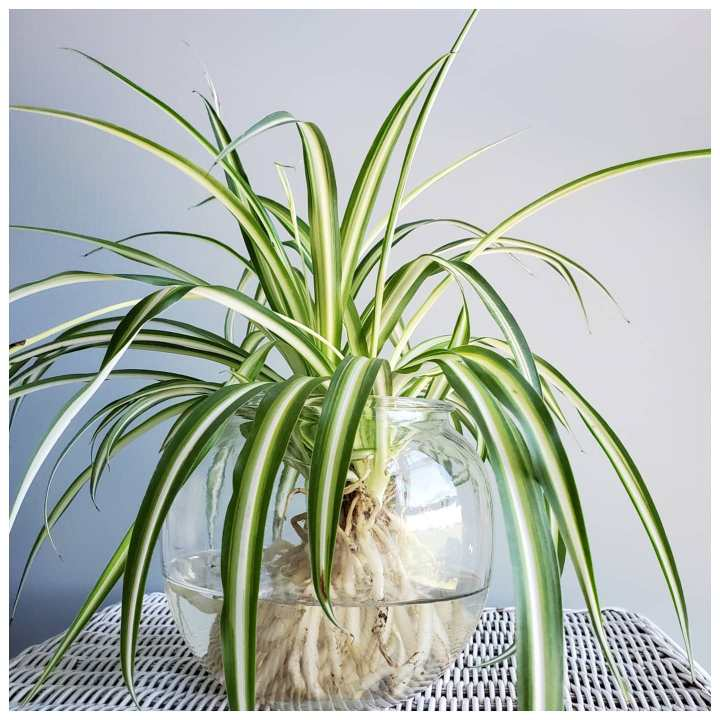 10 Best Indoor Plants For Nepali House - Low Maintenance Air-purifying Houseplants