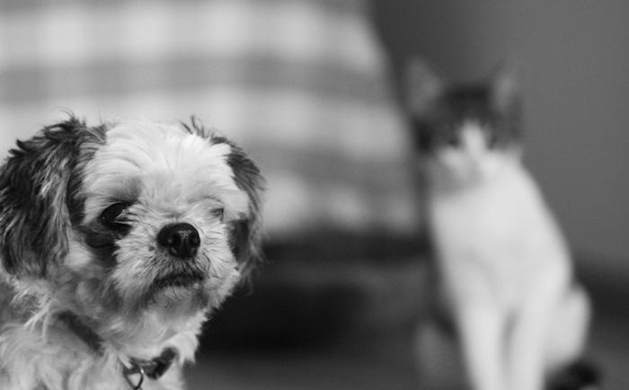 Tips Penggunaan Pembasmi Kutu Anjing dan Kucing