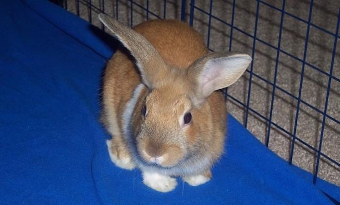 Kelinci di dalam kandang
