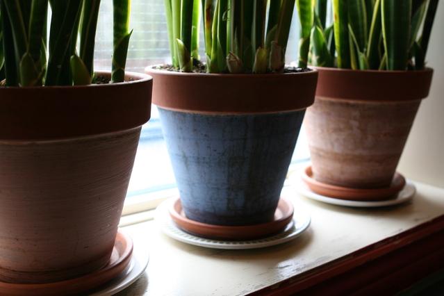 8 Kiat Mengganti Pot Tanaman (1)