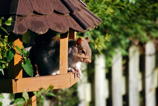 Hamster | Img:freeimages.com