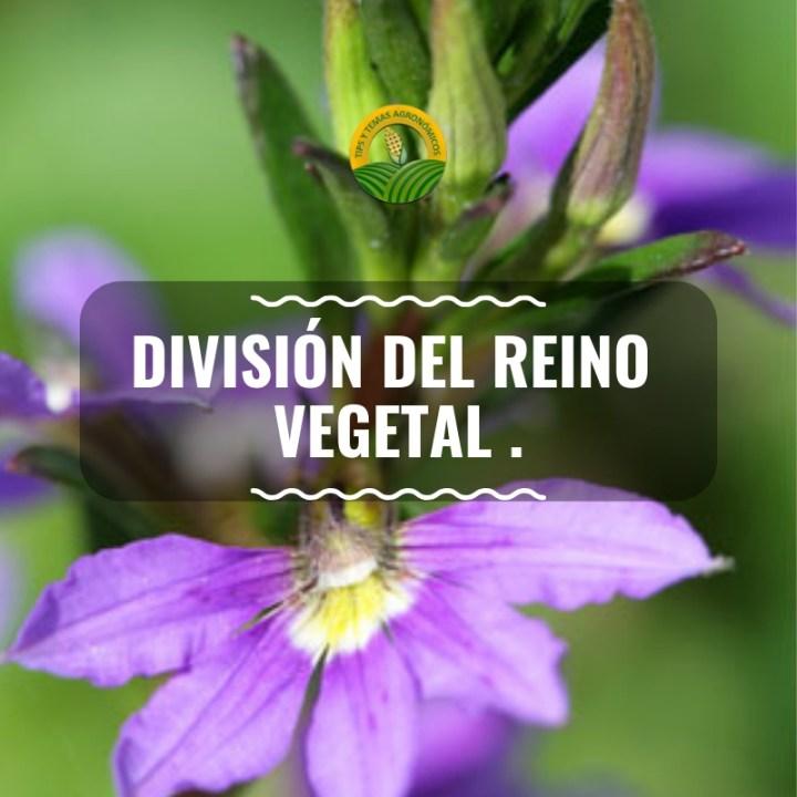 división sencilla del reino vegetal.