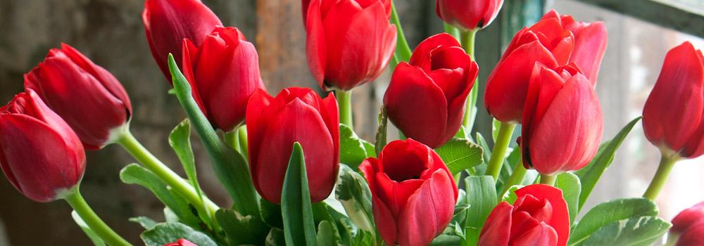 Wholesale Bulk Flowers Tipton Hurst 5016663333 Tipton