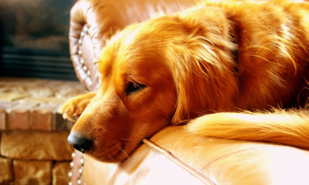 Best Dog Camera Treat Dispenser | Interactive Pet Cameras