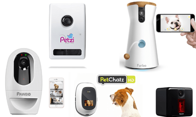 Best Dog Camera Treat Dispenser | Interactive Pet Cameras