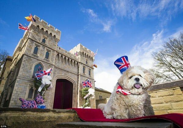 Windsor pour un chien