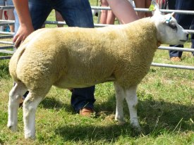 Champion of Champions at Tiree Show 2014