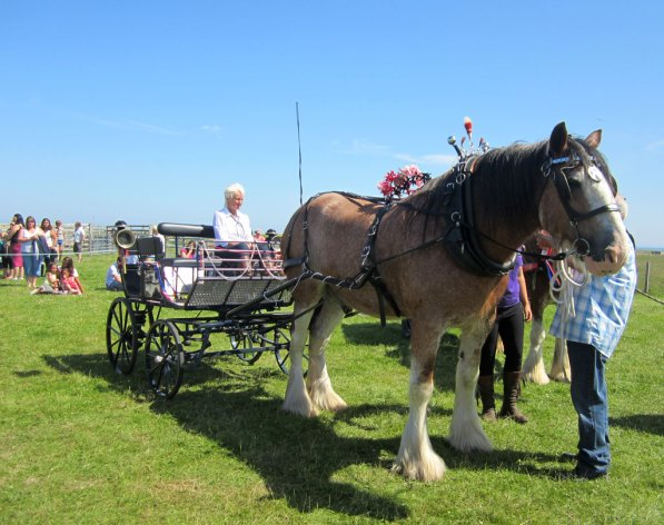 Clydesdales in Turnout Class at Tiree Show 2013