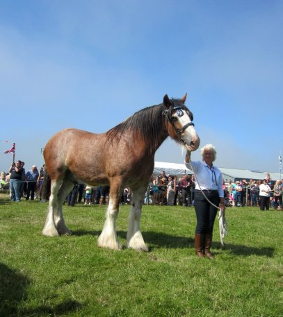 Clydesdale at Tiree Show