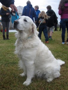 Briagha, Golden Oldie winner at Tiree Show
