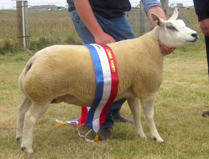 Champion of Champions the Supreme Sheep Champion