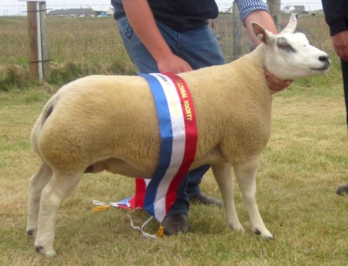 Champion of Champions the Supreme Sheep Champion