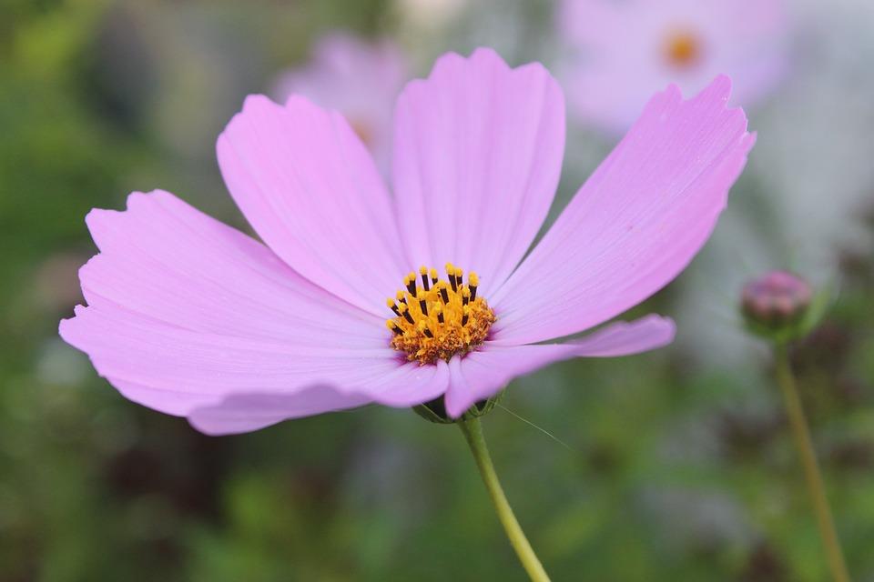 daisy-1148576_960_720