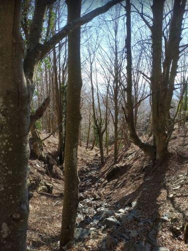 Foto con árboles sin hojas en la montaña del Montseny