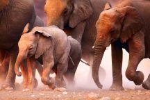 Elefanten am liebsten klein