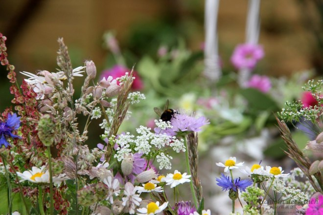 Wiesenblumen für die Sommersonnenwende