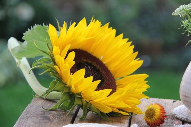 Sommer, Sonne, Sonneblume