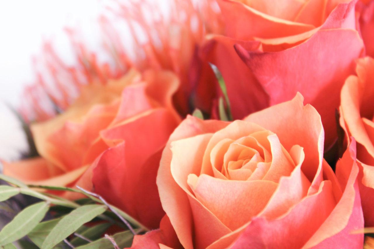 Rosen Blumenstrau  kostenlose Bilder download  titania foto