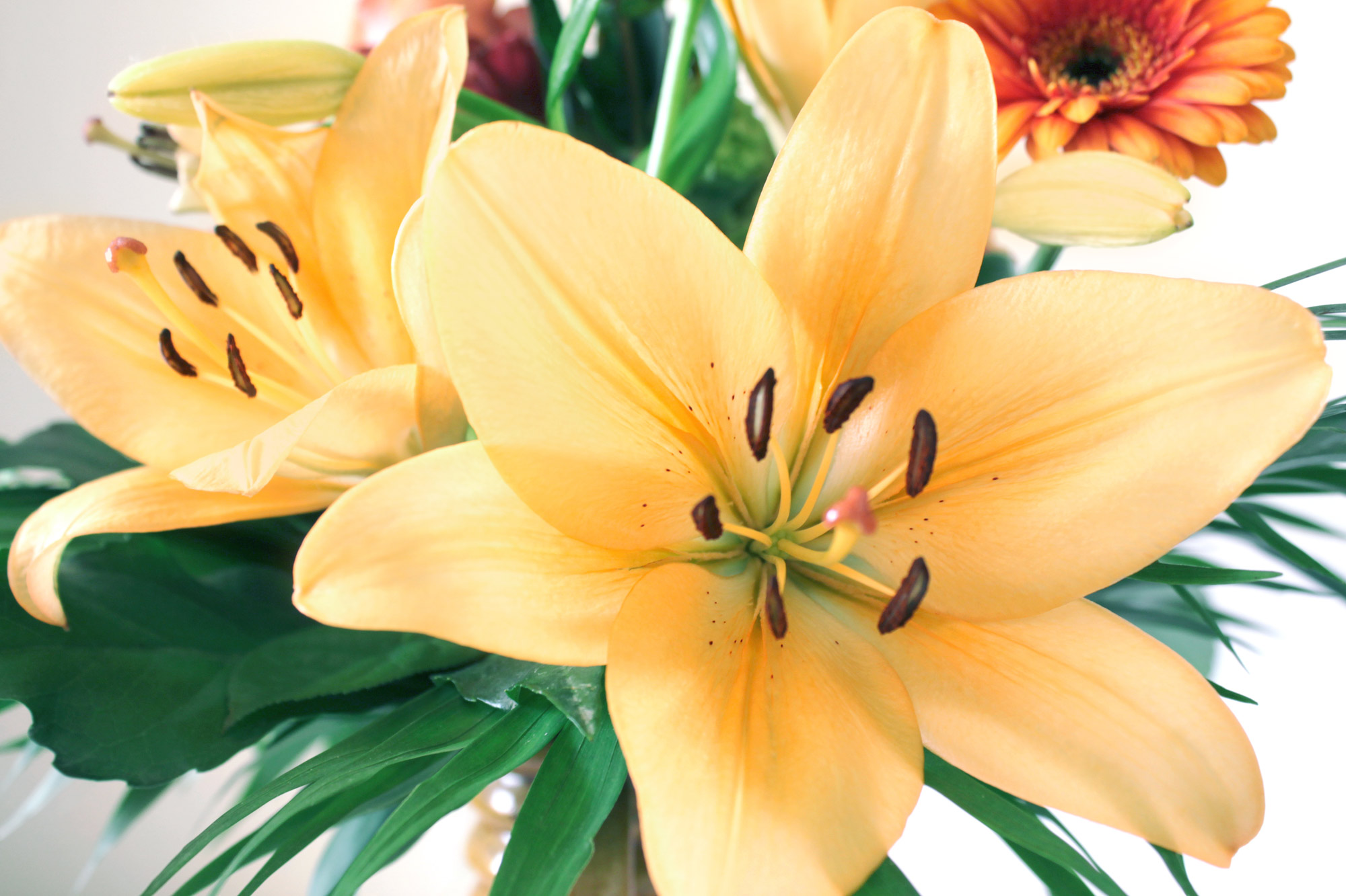Lilien Blumenstrau  kostenlose Bilder download  Titania