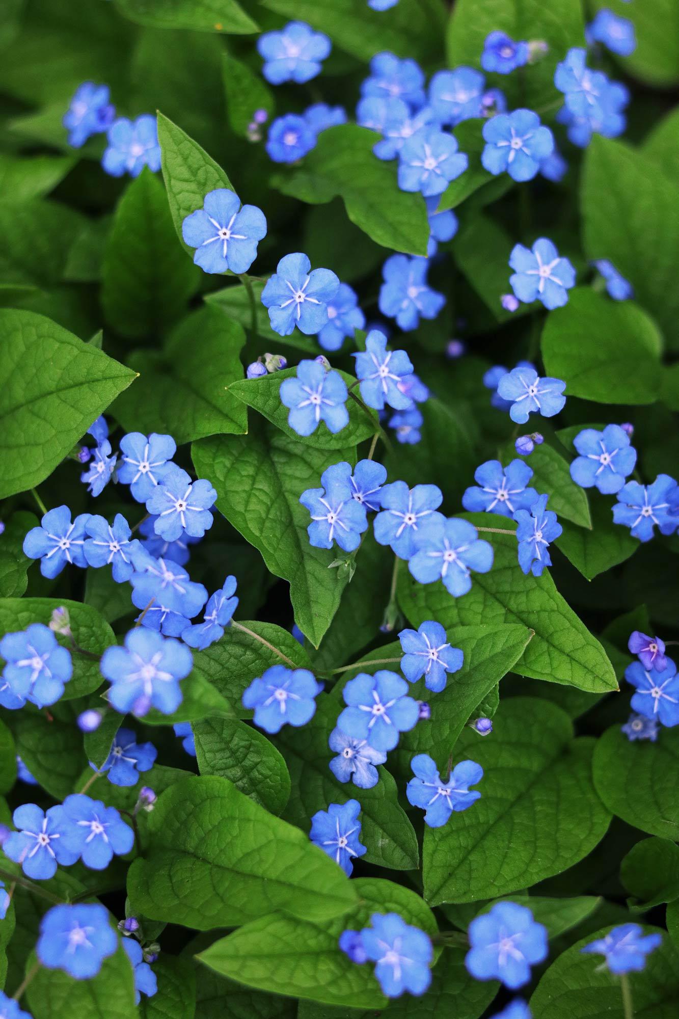 Blumenfotos Fruehling