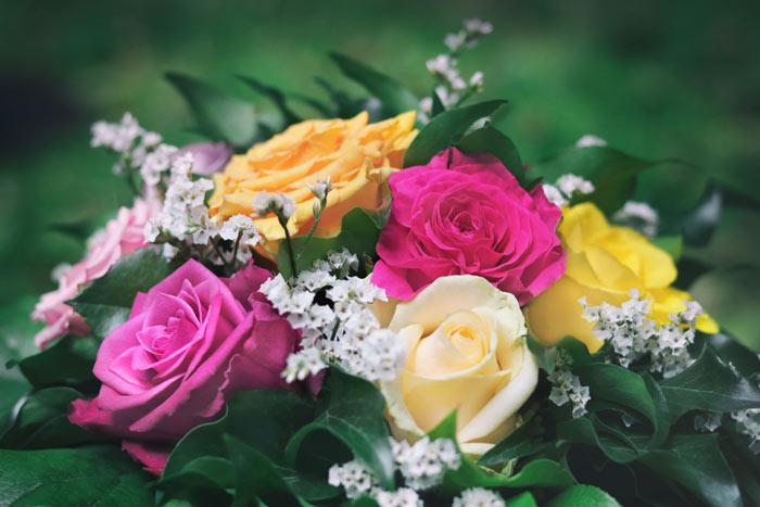 Blumenbilder Zum Ausdrucken