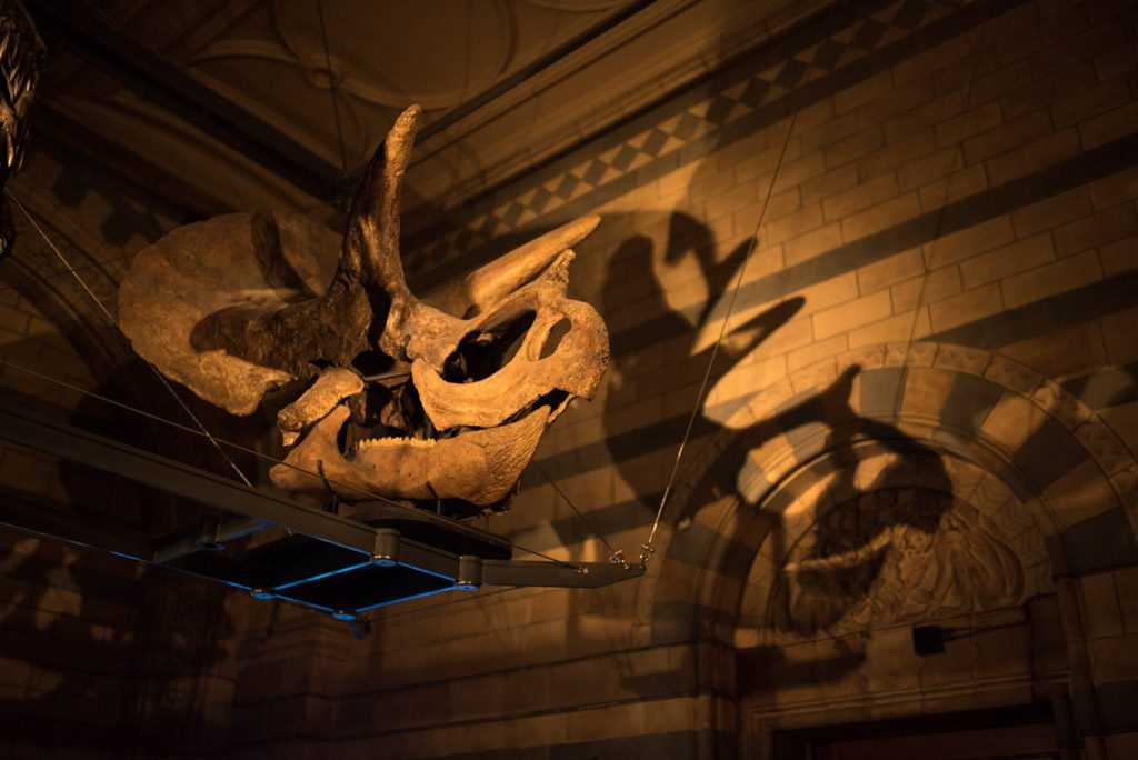 TitaniumGeek untitled-38-of-64-1024x684 Sleeping with Dinosaurs - DinoSnores at the Natural History Museum Titanium Adventures NTFSCD Now Time for Something Completely Different Natural History Museum DinoSnores