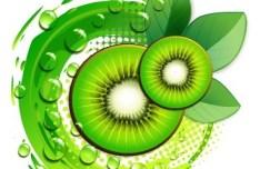 100 Natural Kiwifruit Vector Illustration