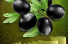 Elegant Vector Olive Oil Design Elements 04