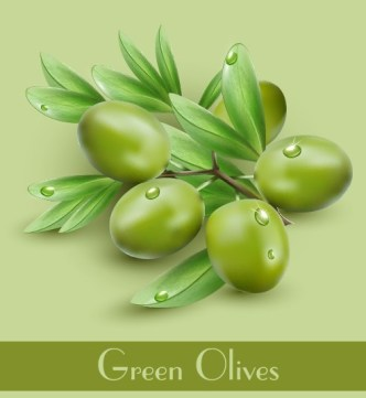 Vector Olive Oil Labels and Logos 06