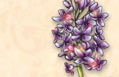 Elegant Colorful Spring Flower Background 03