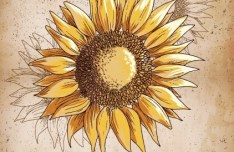 Vintage Spring Sunflower Background 03