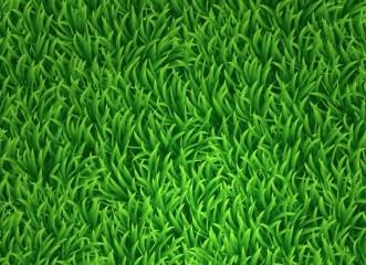 Vector Green Grass Background 01