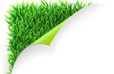 Vector Green Grass Background 02