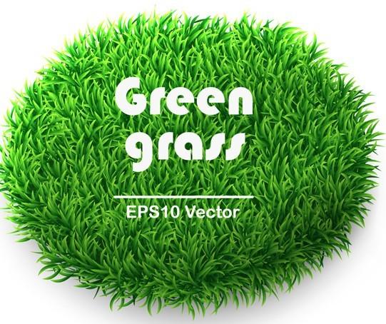 Vector Green Grass Background 04