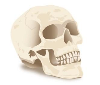 Simple Skull Vector Illustration
