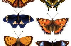 Vector Colorful Butterfly Illustrations