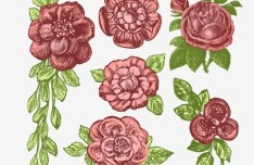 Classical Hand-Drawn Vector Rose 02