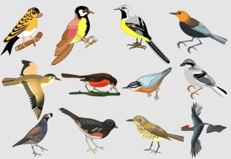 Classical Hand-Drawn Vector Birds
