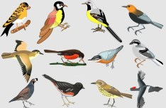 Classical Hand-Drawn Vector Birds